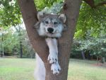 .:Climbing Trees:. by Taxidermy-Pride