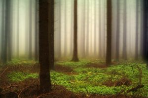 The Misty Woods by_PeterK by bnext