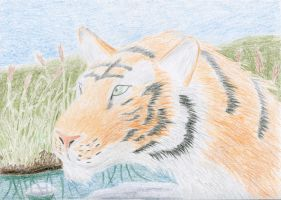 Tiger by dragonis1
