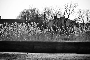 Fences and Foxtails by WickedOwl514