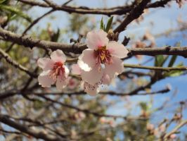 Peach Flowers by Nandanyx