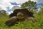 Galapagos Tortoise by JS2010