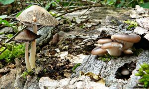 The Life Of Mushrooms by Estruda