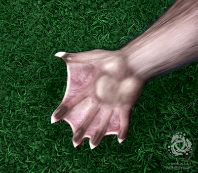 Rajara otter paw / laying in the grass by Lutra75