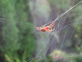 Spider in web series two 04 by teletran