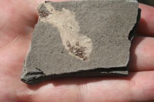 Bentonite Shale by Mountaineer47