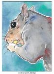 ACEO 10/07/12 Squirrel by April-A