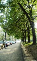Trees On Street by VeronicaPsycho
