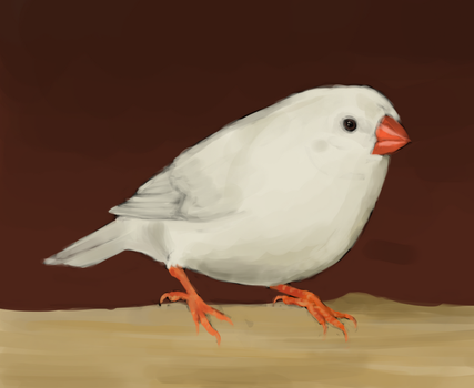 Finch Digital Painting (also vid and commentary) by channellehazel
