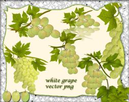 White Grape1 by roula33