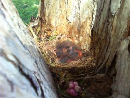 Birds in a Nest by TheWallProducciones