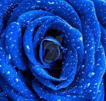 Blue Rose by DevchonkaLucky