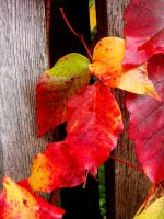 Touch of Fall III by TriciaStucenski