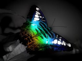 butterfly . by charlotteSs92