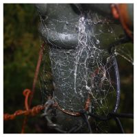 Webbed. by Ackriff
