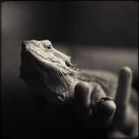 i am the lizard king by JakezDaniel
