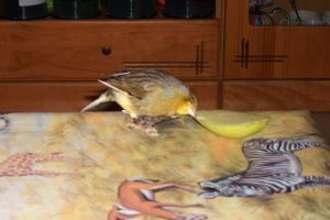 pajarito likes apples a lot by butterfly1980