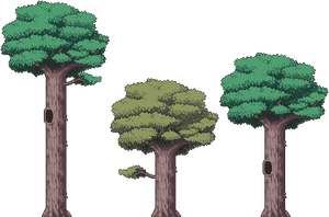 Trees by Pukahuna
