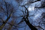 Blue sky and naked trees by voldemometr