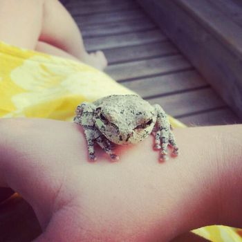 Helloz froggy by FaireQueen