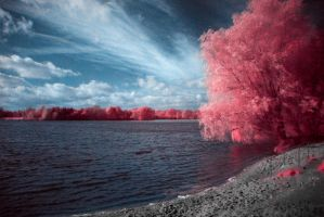 Infrared by Poetriger