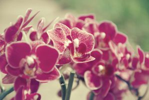 orchid by lenaih