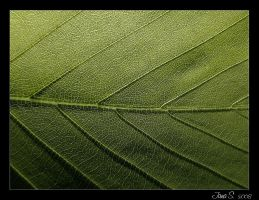 Green leaf by Jajka24