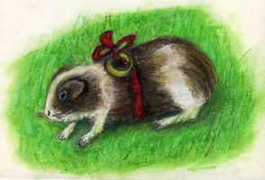 Guinea Pig by Bombadyl