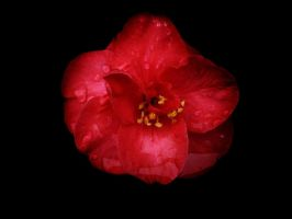 a red un by awjay
