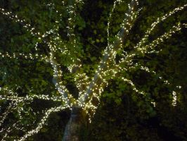 Twinkly tree lights by ggeudraco