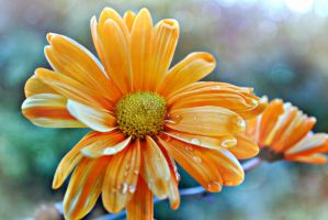 Scents Of Sunshine by suezn