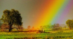 Under The Rainbow III by cavinton