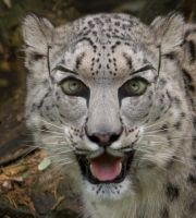White Leopard Makeup by Mago2007