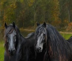 Black Horses by gfaruque