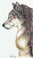 Male Wolf by deadhowl