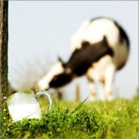 Got Milk? by ISO25