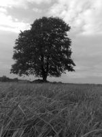 black tree by tuta158