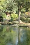 Coombe Wood's  Calm Green Carp Pond by aegiandyad