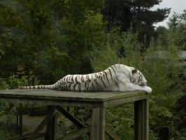 Colchester Zoo by c-r-o-f-t