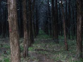 The Parallel Forest by iwantmyanime