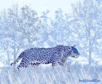 Snow Leopard by rooey1