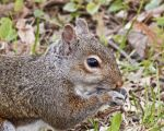 Squirrel by CRGPhotography