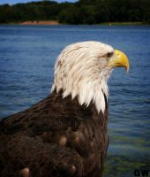 Eagle 2 by Gatewhale