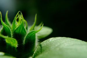 New Life by Tricia-Danby