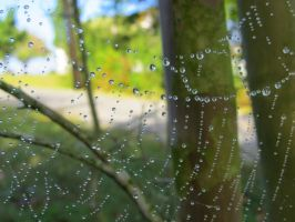Dew-dropped Spiderweb by Philyra2