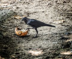 A crow. by jennystokes