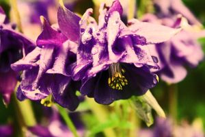 Too much purple by naturel-lumineux