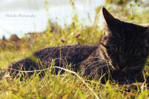 Lucy in the grass by MichisArt