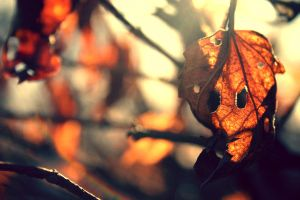 Face In the Leaves by CountryBumkin