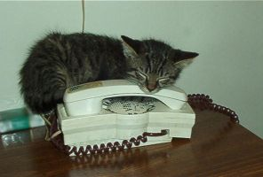 kitten on the phone by xoet